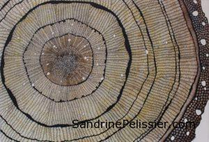 cross section of tree painting by North Vancouver artist Sandrine Pelissier