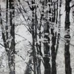 black and white forest painting